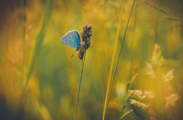 butterfly-wallpaper-(1)______by_______twalls - Copy.jpg