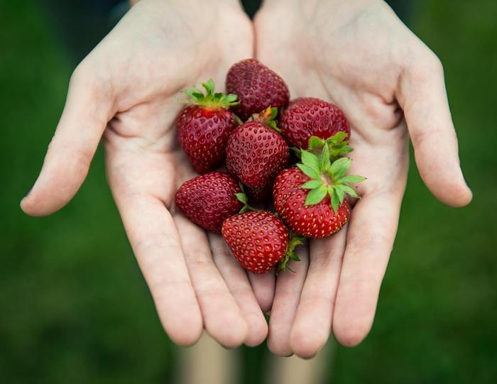 strawberry-wallpaper-(92)-by-twalls.jpg