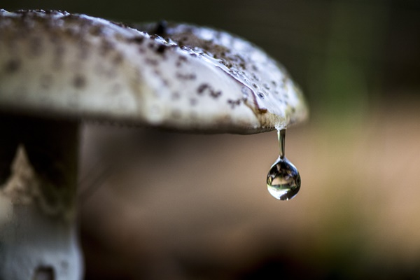 water-drop-wallpaper-(149)__by___twalls.jpg