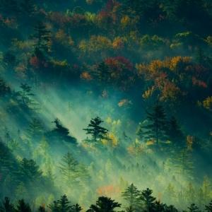 Bộ hình nền rừng núi mộc mạc cho các dòng máy BlackBerry màn hình vuông 1:1