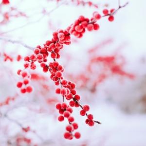 Chào tháng 12 cùng những hình nền đẹp và độc đáo về thiên nhiên dành cho Passport