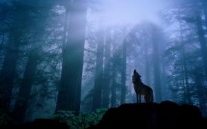 Bộ hình nền chủ đề động vật - Chó Sói