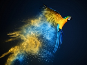 Parrot birds wallpapers by Telasm